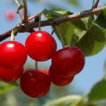 Low Hanging Fruit, Salami Style